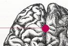 Visit the Center for Neural Decision Making site