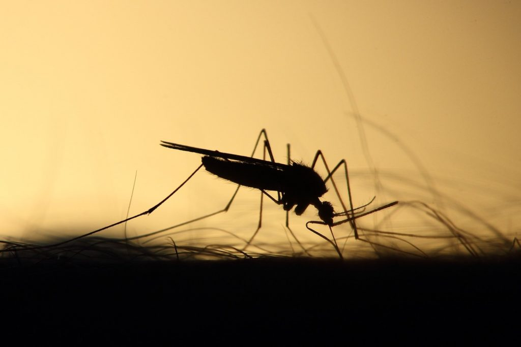 mosquito in high definition